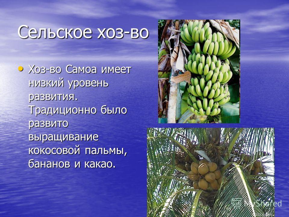 Сельское хоз-во Хоз-во Самоа имеет низкий уровень развития. Традиционно было развито выращивание кокосовой пальмы, бананов и какао. Хоз-во Самоа имеет низкий уровень развития. Традиционно было развито выращивание кокосовой пальмы, бананов и какао.