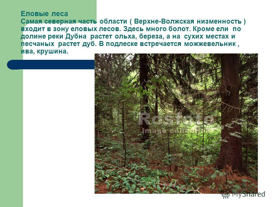 Еловые леса Самая северная часть области ( Верхне-Волжская низменность ) входит в зону еловых лесов. Здесь много болот. Кроме ели по долине реки Дубна растет ольха, береза, а на сухих местах и песчаных растет дуб. В подлеске встречается можжевельник,