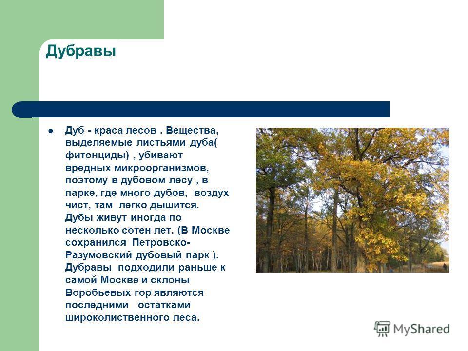 Дубравы Дуб - краса лесов. Вещества, выделяемые листьями дуба( фитонциды), убивают вредных микроорганизмов, поэтому в дубовом лесу, в парке, где много дубов, воздух чист, там легко дышится. Дубы живут иногда по несколько сотен лет. (В Москве сохранил