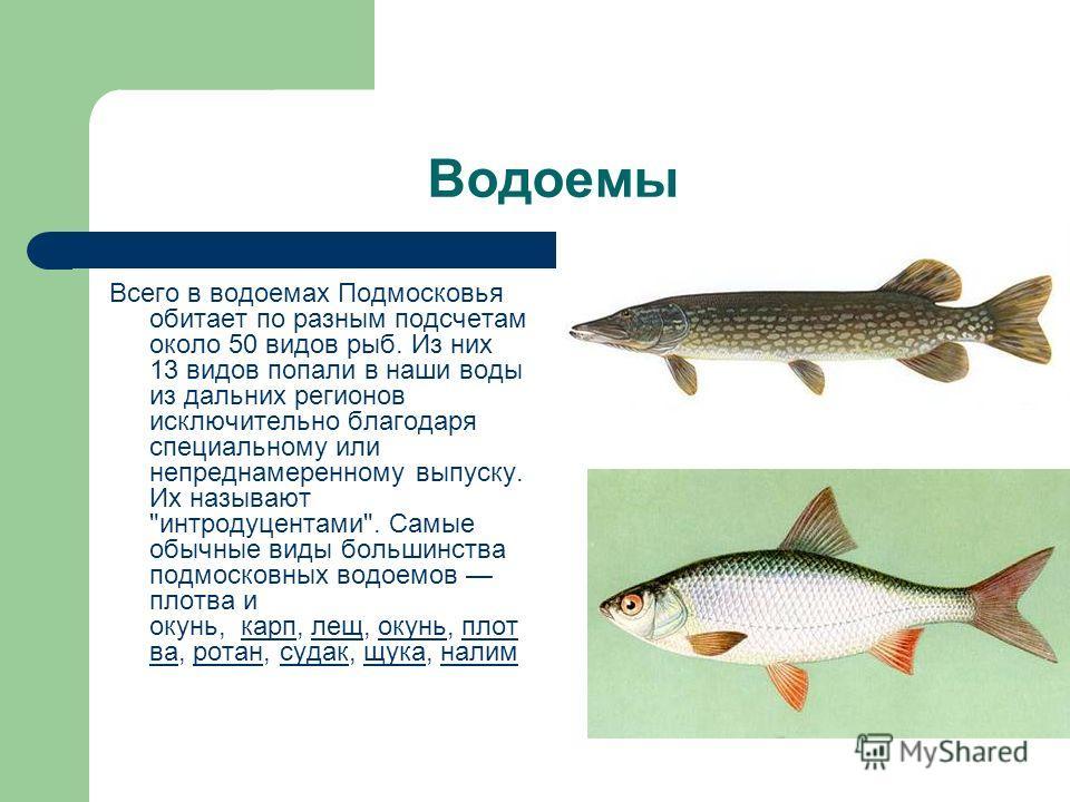Водоемы Всего в водоемах Подмосковья обитает по разным подсчетам около 50 видов рыб. Из них 13 видов попали в наши воды из дальних регионов исключительно благодаря специальному или непреднамеренному выпуску. Их называют