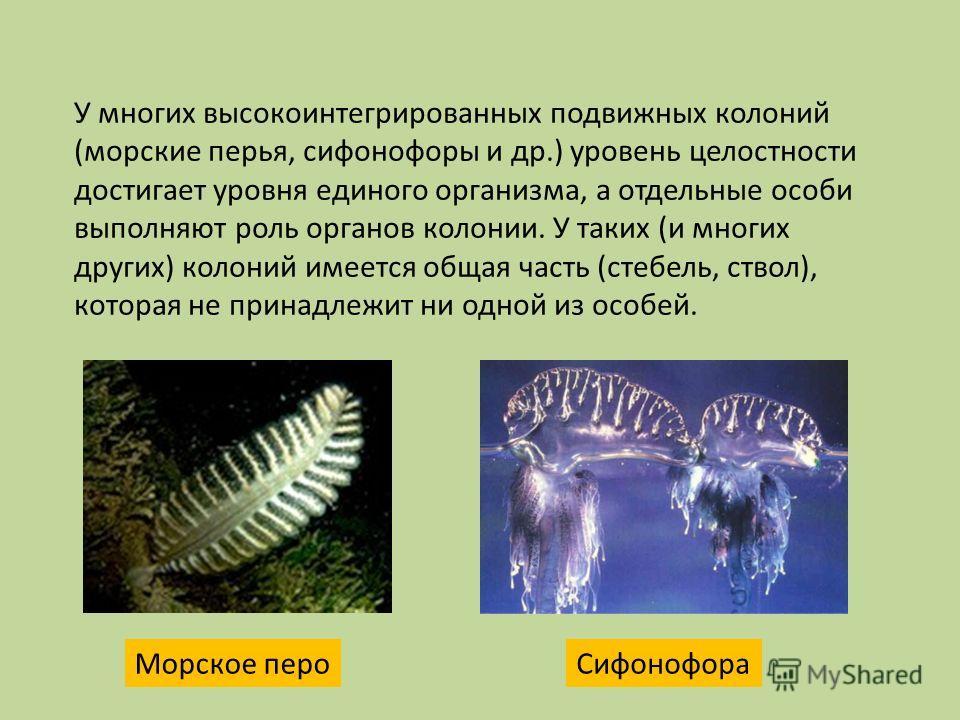 У многих высокоинтегрированных подвижных колоний (морские перья, сифонофоры и др.) уровень целостности достигает уровня единого организма, а отдельные особи выполняют роль органов колонии. У таких (и многих других) колоний имеется общая часть (стебел