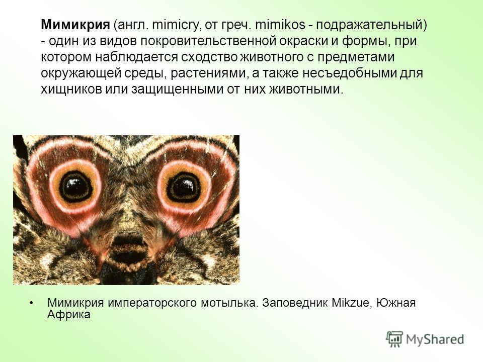 Мимикрия императорского мотылька. Заповедник Mikzue, Южная Африка Мимикрия (англ. mimicry, от греч. mimikos - подражательный) - один из видов покровительственной окраски и формы, при котором наблюдается сходство животного с предметами окружающей сред