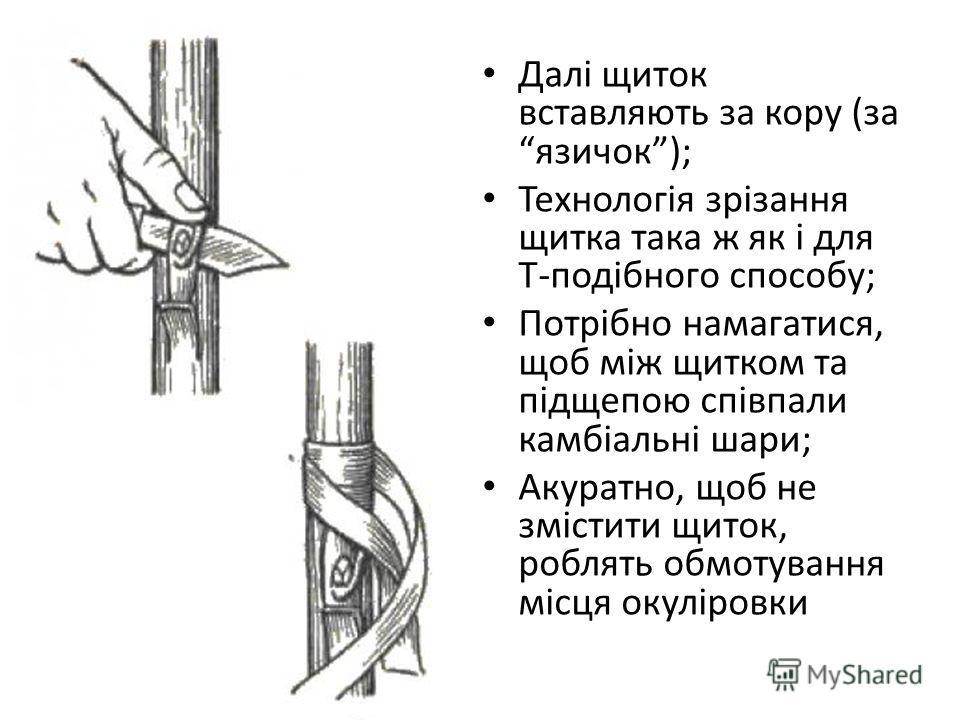 Далі щиток вставляють за кору (за язичок); Технологія зрізання щитка така ж як і для Т-подібного способу; Потрібно намагатися, щоб між щитком та підщепою співпали камбіальні шари; Акуратно, щоб не змістити щиток, роблять обмотування місця окуліровки
