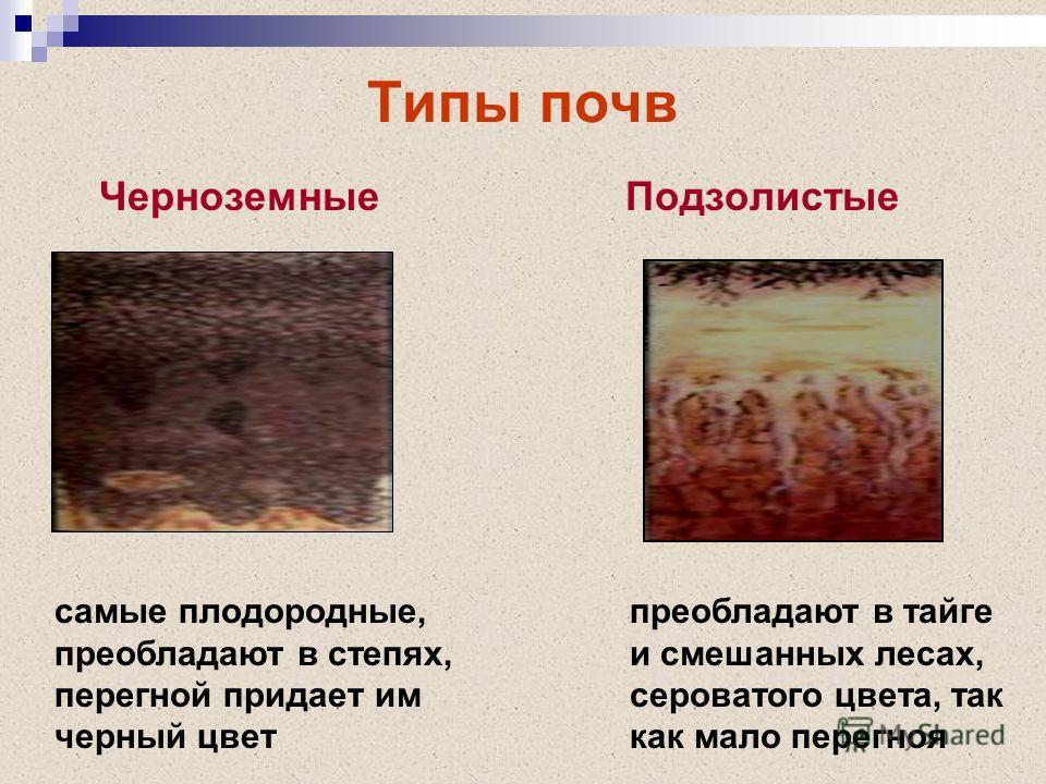 Типы почв ЧерноземныеПодзолистые самые плодородные, преобладают в степях, перегной придает им черный цвет преобладают в тайге и смешанных лесах, сероватого цвета, так как мало перегноя