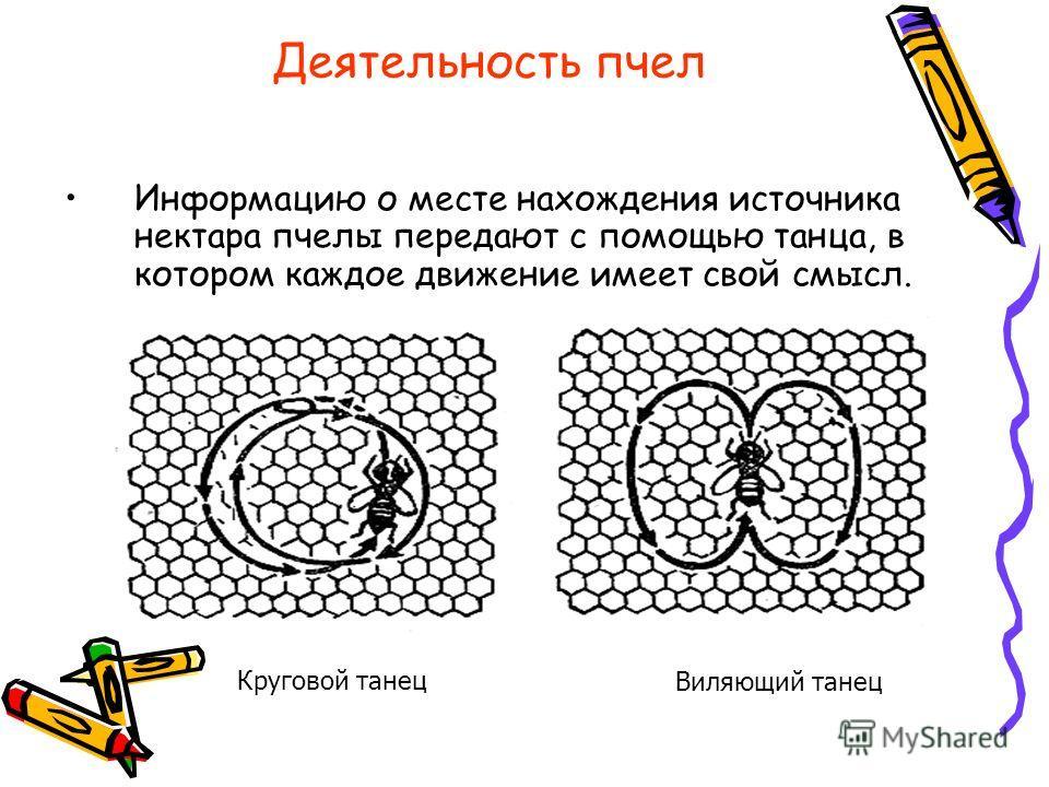 Деятельность пчел Информацию о месте нахождения источника нектара пчелы передают с помощью танца, в котором каждое движение имеет свой смысл. Круговой танец Виляющий танец