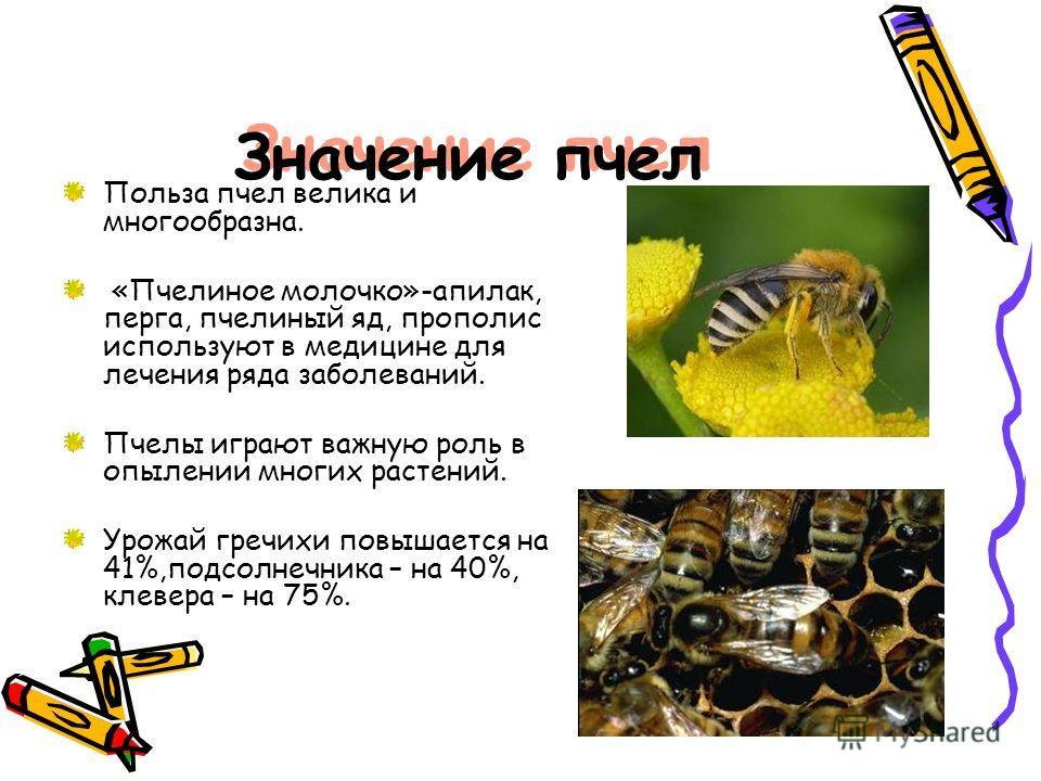 Значение пчел Польза пчел велика и многообразна. «Пчелиное молочко»-апилак, перга, пчелиный яд, прополис используют в медицине для лечения ряда заболеваний. Пчелы играют важную роль в опылении многих растений. Урожай гречихи повышается на 41%,подсолн