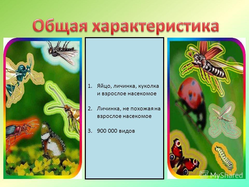 1.Яйцо, личинка, куколка и взрослое насекомое 2.Личинка, не похожая на взрослое насекомое 3.900 000 видов
