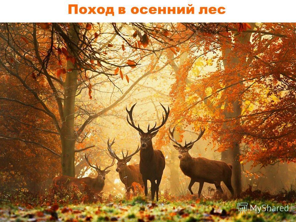 Поход в осенний лес