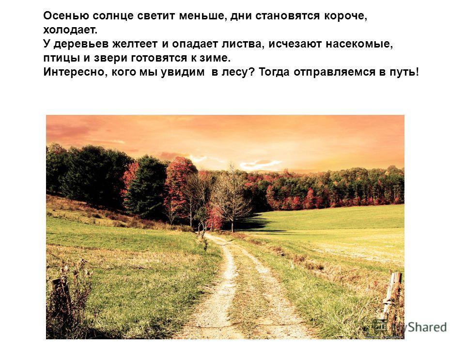 Осенью солнце светит меньше, дни становятся короче, холодает. У деревьев желтеет и опадает листва, исчезают насекомые, птицы и звери готовятся к зиме. Интересно, кого мы увидим в лесу? Тогда отправляемся в путь!
