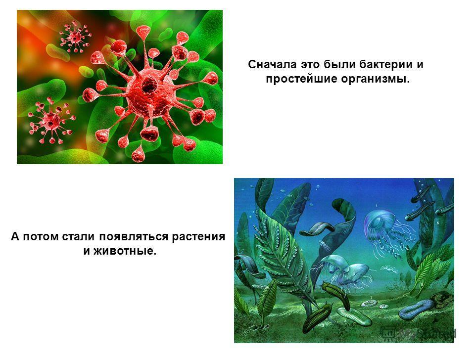 Сначала это были бактерии и простейшие организмы. А потом стали появляться растения и животные.