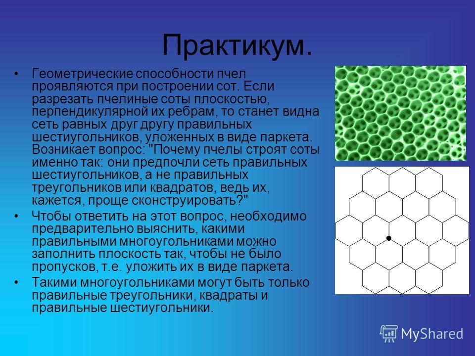 Практикум. Геометрические способности пчел проявляются при построении сот. Если разрезать пчелиные соты плоскостью, перпендикулярной их ребрам, то станет видна сеть равных друг другу правильных шестиугольников, уложенных в виде паркета. Возникает воп