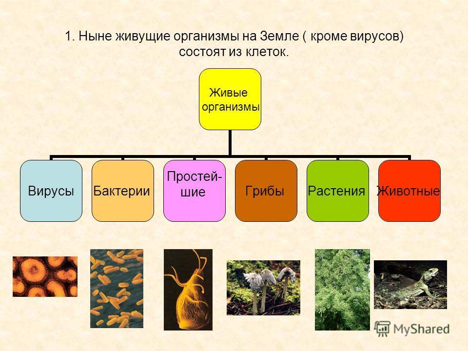 1. Ныне живущие организмы на Земле ( кроме вирусов) состоят из клеток. Живые организмы ВирусыБактерии Простей- шиеГрибыРастенияЖивотные