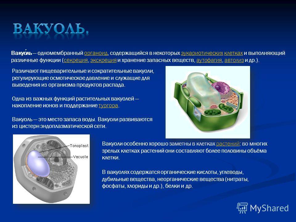 Вакуоль одномембранный органоид, содержащийся в некоторых эукариотических клетках и выполняющий различные функции (секреция, экскреция и хранение запасных веществ, аутофагия, автолиз и др.).органоидэукариотическихклеткахсекрецияэкскрецияаутофагияавто