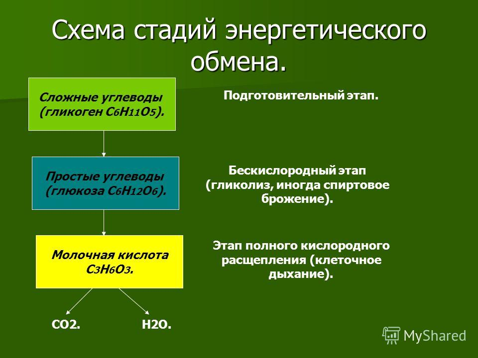 Схема стадий энергетического обмена. Сложные углеводы (гликоген C 6 H 11 O 5 ). Простые углеводы (глюкоза C 6 H 12 O 6 ). Молочная кислота C 3 H 6 O 3. Подготовительный этап. Бескислородный этап (гликолиз, иногда спиртовое брожение). Этап полного кис