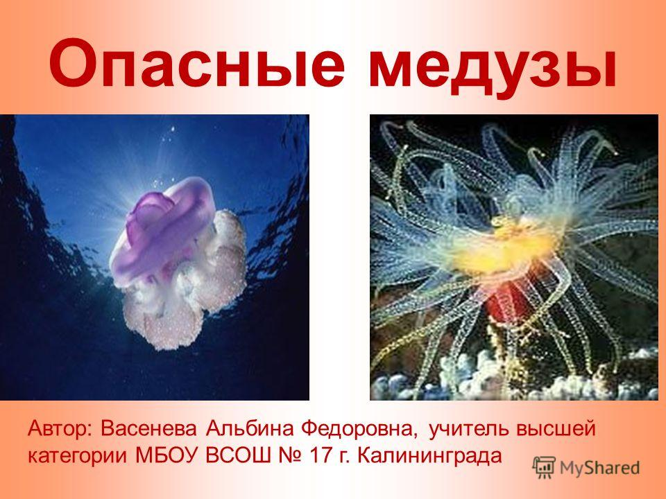Опасные медузы Автор: Васенева Альбина Федоровна, учитель высшей категории МБОУ ВСОШ 17 г. Калининграда