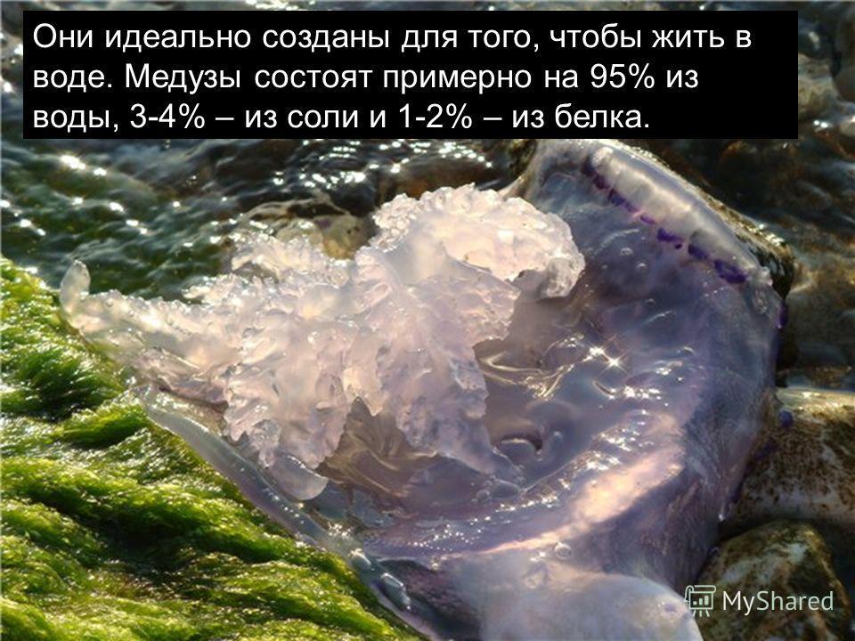 Они идеально созданы для того, чтобы жить в воде. Медузы состоят примерно на 95% из воды, 3-4% – из соли и 1-2% – из белка.