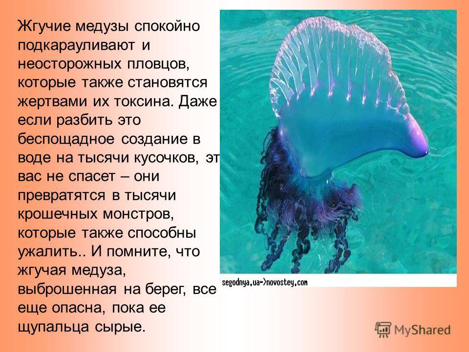 Жгучие медузы спокойно подкарауливают и неосторожных пловцов, которые также становятся жертвами их токсина. Даже если разбить это беспощадное создание в воде на тысячи кусочков, это вас не спасет – они превратятся в тысячи крошечных монстров, которые