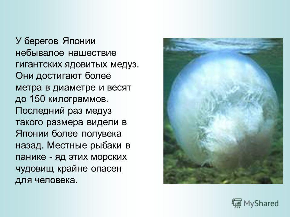 У берегов Японии небывалое нашествие гигантских ядовитых медуз. Они достигают более метра в диаметре и весят до 150 килограммов. Последний раз медуз такого размера видели в Японии более полувека назад. Местные рыбаки в панике - яд этих морских чудови