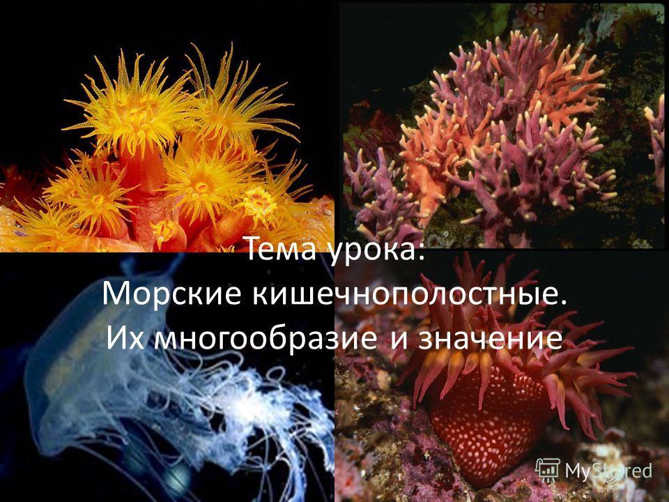 Тема урока: Морские кишечнополостные. Их многообразие и значение