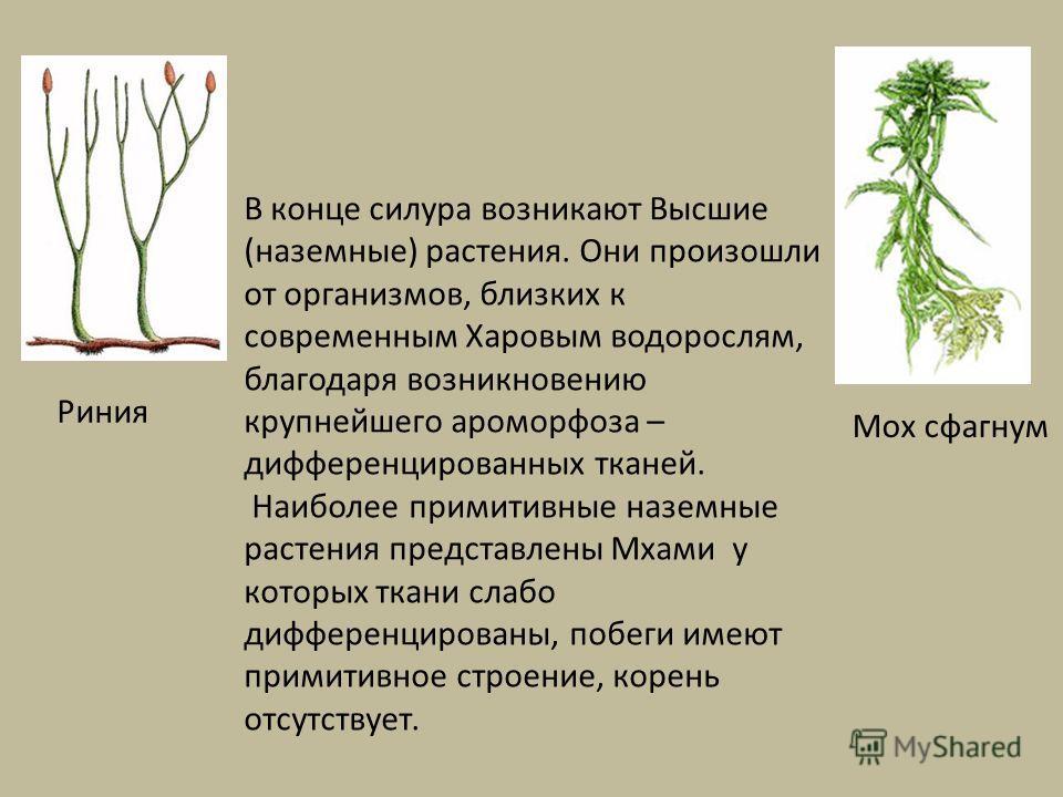 В конце силура возникают Высшие (наземные) растения. Они произошли от организмов, близких к современным Харовым водорослям, благодаря возникновению крупнейшего ароморфоза – дифференцированных тканей. Наиболее примитивные наземные растения представлен