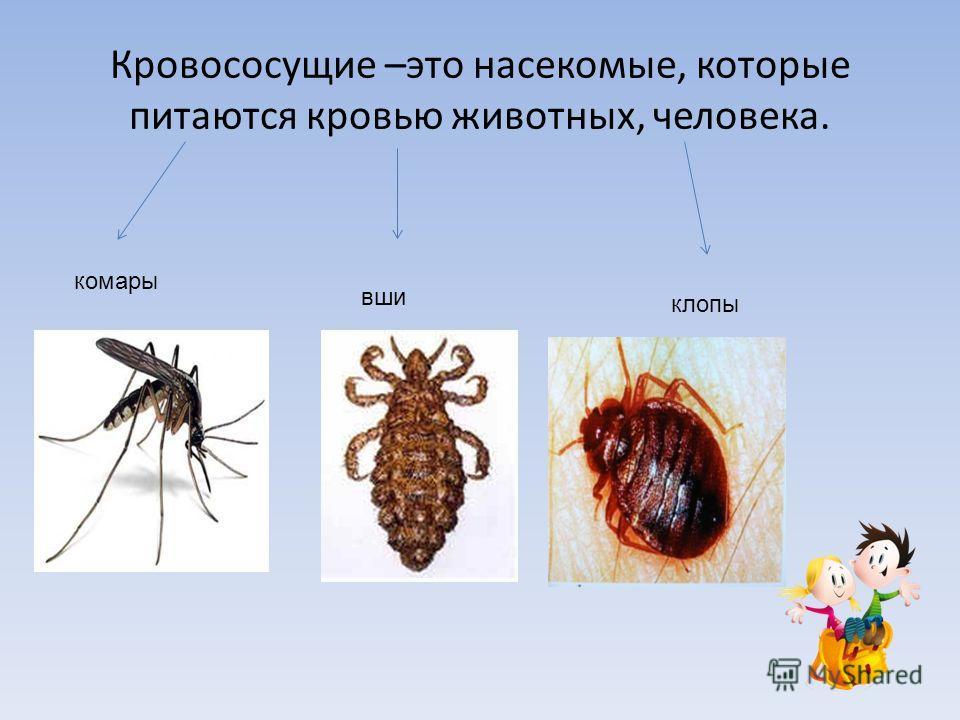 Кровососущие –это насекомые, которые питаются кровью животных, человека. комары вши клопы