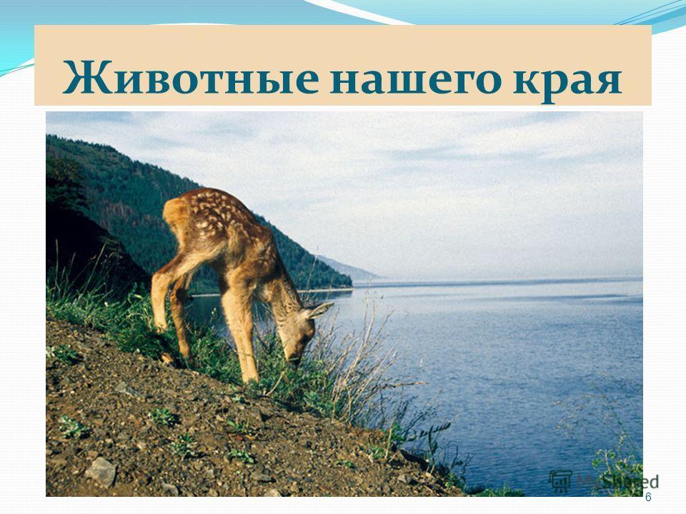 Животные нашего края 6