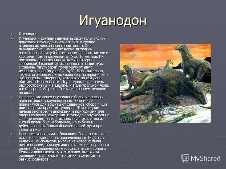 Игуанодон Игуанодон Игуанодон Игуанодон - крупный двуногий растительноядный динозавр. Игуанодоны относились к группе птиценогих динозавров (орнитопод). Они передвигались на задних ногах, питались растительной пищей (в основном папоротниками и хвощами