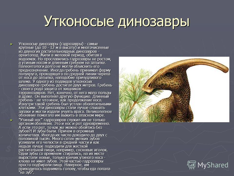 Утконосые динозавры Утконосые динозавры (гадрозавры) - самые крупные (до 10 - 12 м в высоту) и многочисенные из двуногих растительноядных динозавров - орнитопод. Жили в меловой период, обитая в водоемах. Но прославились гадрозавры не ростом, а утиным