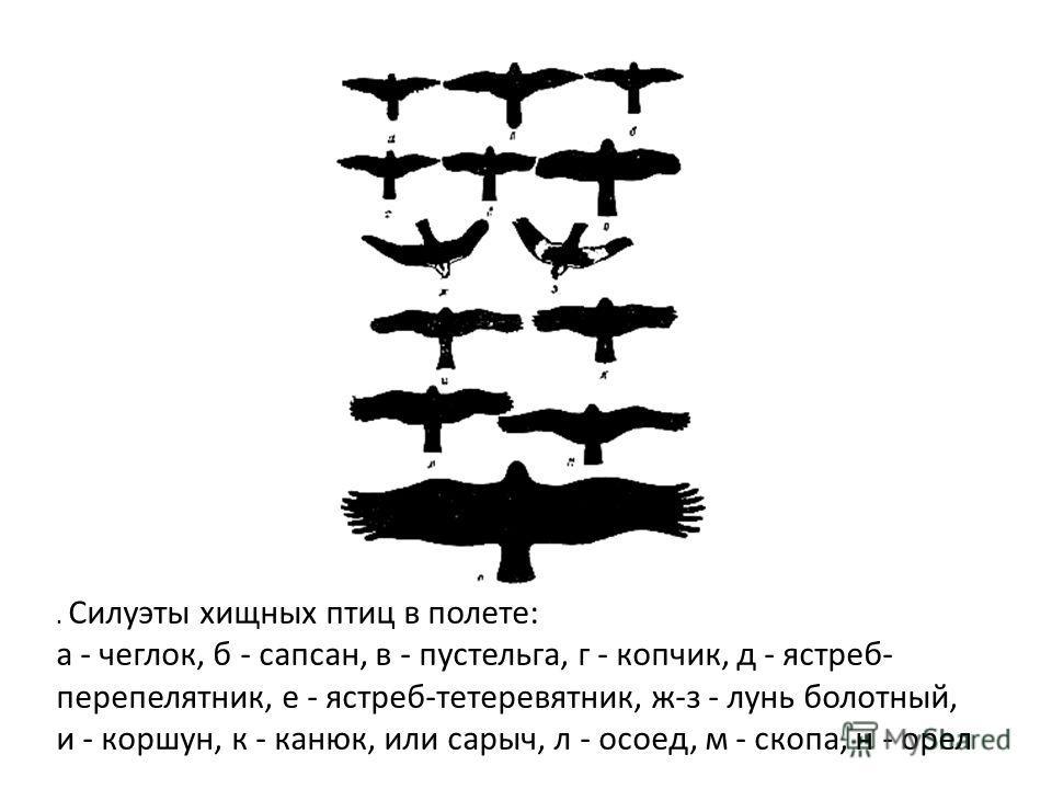 . Силуэты хищных птиц в полете: а - чеглок, б - сапсан, в - пустельга, г - копчик, д - ястреб- перепелятник, е - ястреб-тетеревятник, ж-з - лунь болотный, и - коршун, к - канюк, или сарыч, л - осоед, м - скопа, н - орел