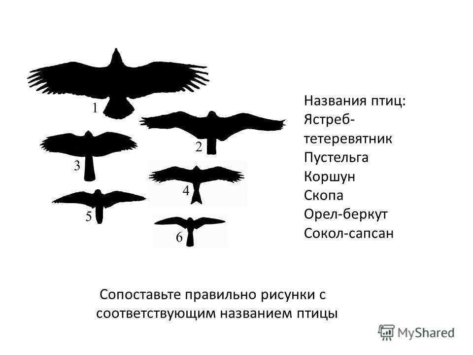 Названия птиц: Ястреб- тетеревятник Пустельга Коршун Скопа Орел-беркут Сокол-сапсан Сопоставьте правильно рисунки с соответствующим названием птицы