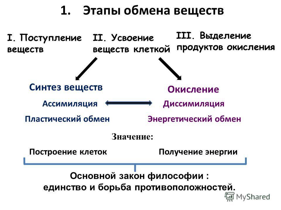 1.Этапы обмена веществ I.Поступление веществ II. Усвоение веществ клеткой III. Выделение продуктов окисления Значение: Синтез веществ Окисление АссимиляцияДиссимиляция Пластический обменЭнергетический обмен Построение клетокПолучение энергии Основной
