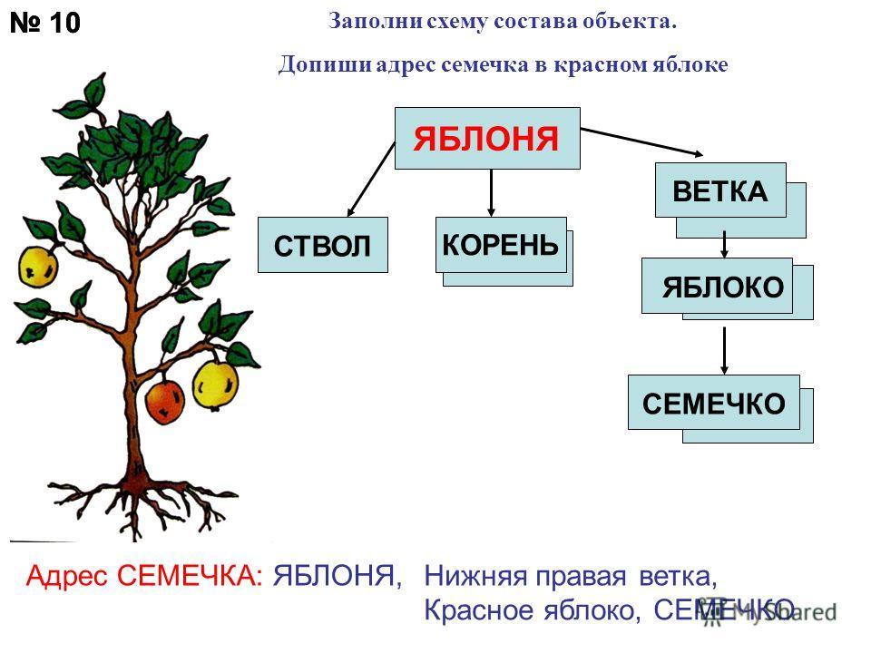 10 Заполни схему состава объекта. Допиши адрес семечка в красном яблоке ЯБЛОКО СЕМЕЧКО Адрес СЕМЕЧКА: ЯБЛОНЯ,Нижняя правая ветка, Красное яблоко, СЕМЕЧКО 10 ЯБЛОНЯ КОРЕНЬ СТВОЛ ВЕТКА