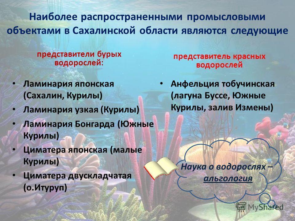 Наиболее распространенными промысловыми объектами в Сахалинской области являются следующие представители бурых водорослей: Ламинария японская (Сахалин, Курилы) Ламинария узкая (Курилы) Ламинария Бонгарда (Южные Курилы) Циматера японская (малые Курилы