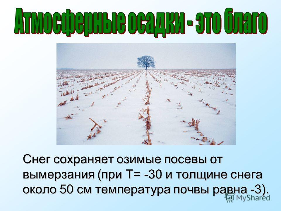 Снег сохраняет озимые посевы от вымерзания (при Т= -30 и толщине снега около 50 см температура почвы равна -3).