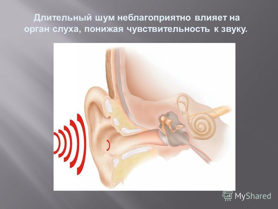 Длительный шум неблагоприятно влияет на орган слуха, понижая чувствительность к звуку.