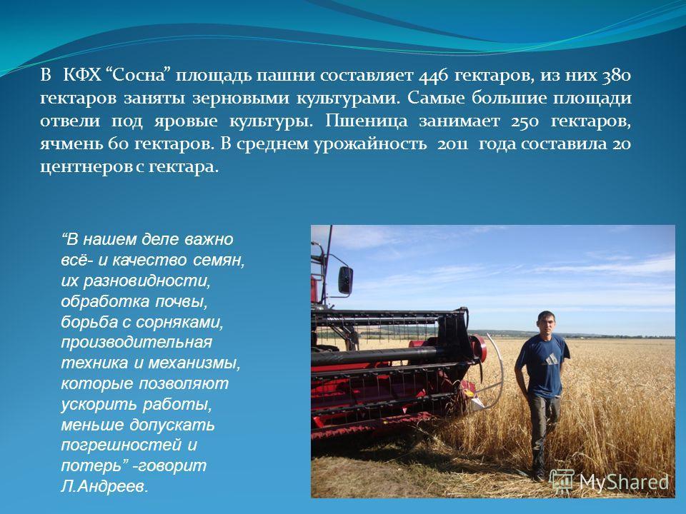В КФХ Сосна площадь пашни составляет 446 гектаров, из них 380 гектаров заняты зерновыми культурами. Самые большие площади отвели под яровые культуры. Пшеница занимает 250 гектаров, ячмень 60 гектаров. В среднем урожайность 2011 года составила 20 цент