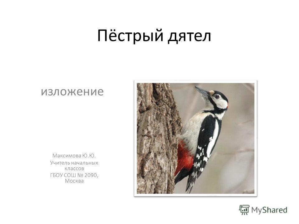 Пёстрый дятел изложение Максимова Ю.Ю. Учитель начальных классов ГБОУ СОШ 2090, Москва