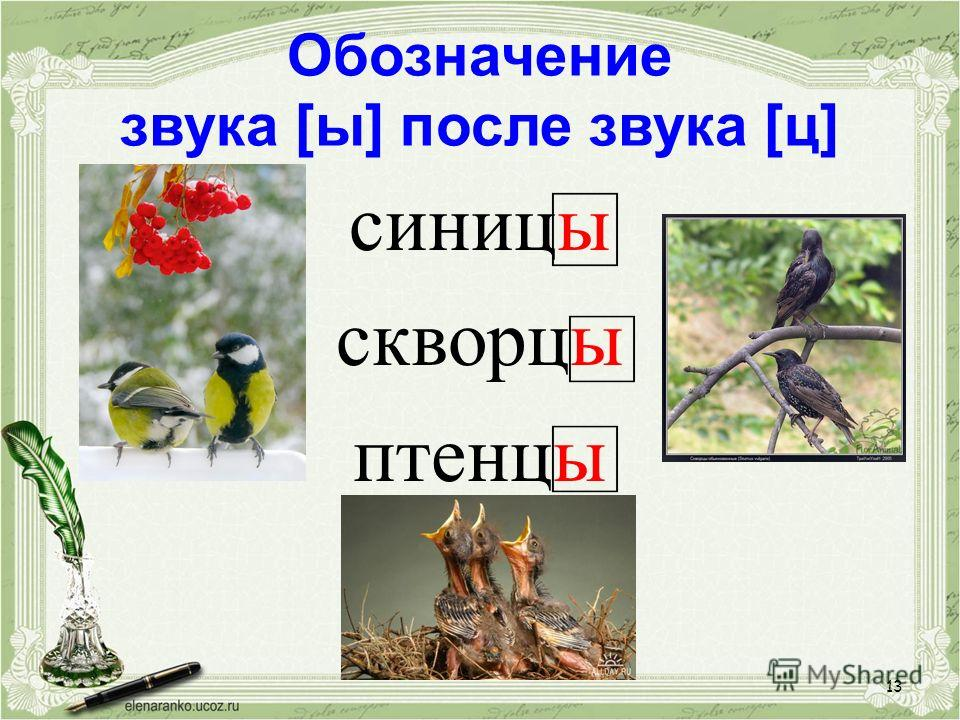 13 Обозначение звука [ы] после звука [ц] синицы скворцы птенцы