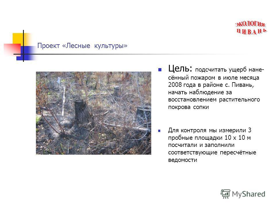 Проект «Лесные культуры» Цель: подсчитать ущерб нане- сённый пожаром в июле месяца 2008 года в районе с. Пивань, начать наблюдение за восстановлением растительного покрова сопки Для контроля мы измерили 3 пробные площадки 10 х 10 м посчитали и заполн