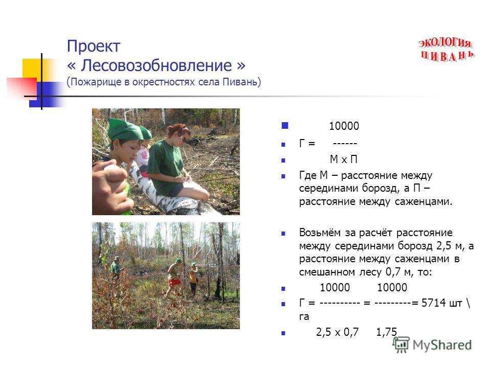 Проект « Лесовозобновление » ( Пожарище в окрестностях села Пивань) 10000 Г = ------ М х П Где М – расстояние между серединами борозд, а П – расстояние между саженцами. Возьмём за расчёт расстояние между серединами борозд 2,5 м, а расстояние между са