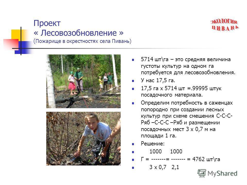 Проект « Лесовозобновление » ( Пожарище в окрестностях села Пивань) 5714 шт\га – это средняя величина густоты культур на одном га потребуется для лесовозобновления. У нас 17,5 га. 17,5 га х 5714 шт =.99995 штук посадочного материала. Определим потреб