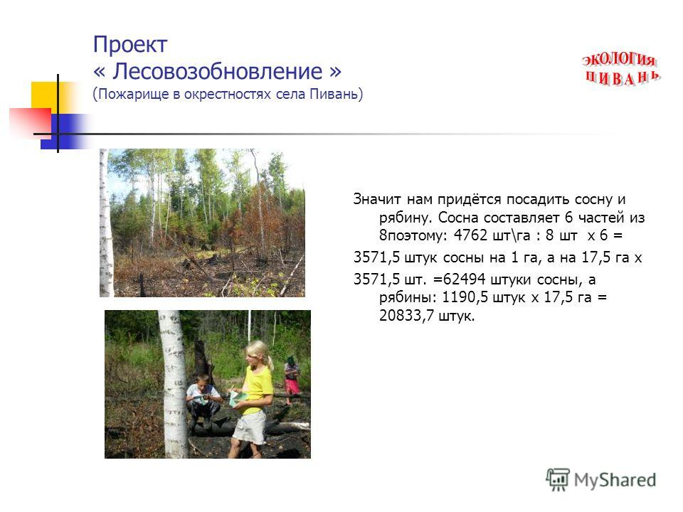 Проект « Лесовозобновление » ( Пожарище в окрестностях села Пивань) Значит нам придётся посадить сосну и рябину. Сосна составляет 6 частей из 8поэтому: 4762 шт\га : 8 шт х 6 = 3571,5 штук сосны на 1 га, а на 17,5 га х 3571,5 шт. =62494 штуки сосны, а