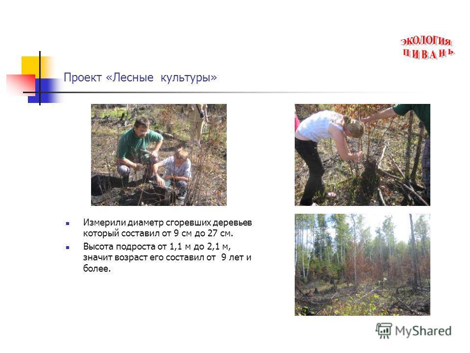 Проект «Лесные культуры» Измерили диаметр сгоревших деревьев который составил от 9 см до 27 см. Высота подроста от 1,1 м до 2,1 м, значит возраст его составил от 9 лет и более.