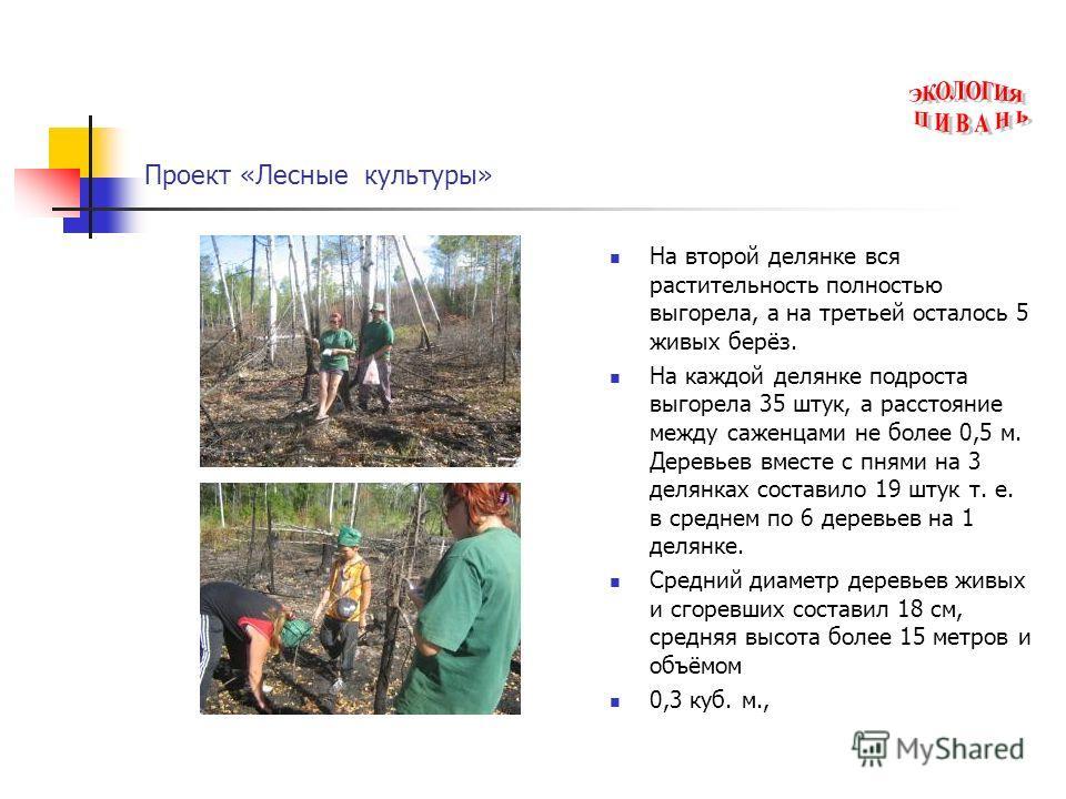 Проект «Лесные культуры» На второй делянке вся растительность полностью выгорела, а на третьей осталось 5 живых берёз. На каждой делянке подроста выгорела 35 штук, а расстояние между саженцами не более 0,5 м. Деревьев вместе с пнями на 3 делянках сос