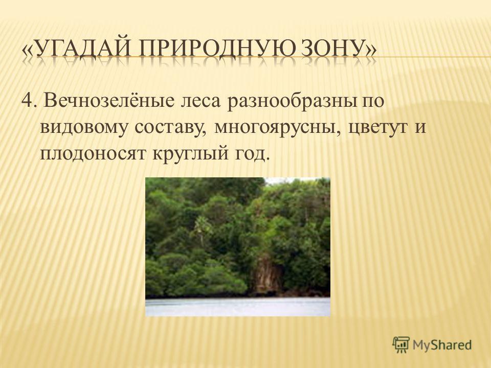 4. Вечнозелёные леса разнообразны по видовому составу, многоярусны, цветут и плодоносят круглый год.