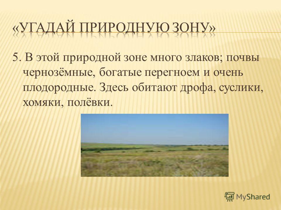 5. В этой природной зоне много злаков; почвы чернозёмные, богатые перегноем и очень плодородные. Здесь обитают дрофа, суслики, хомяки, полёвки.