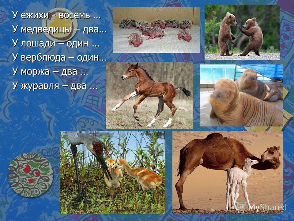 У ежихи - восемь … У медведицы – два… У лошади – один … У верблюда – один… У моржа – два … У журавля – два …