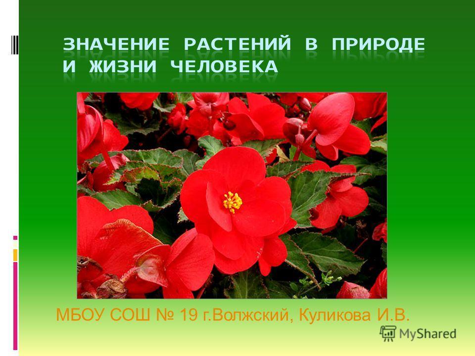 МБОУ СОШ 19 г.Волжский, Куликова И.В.