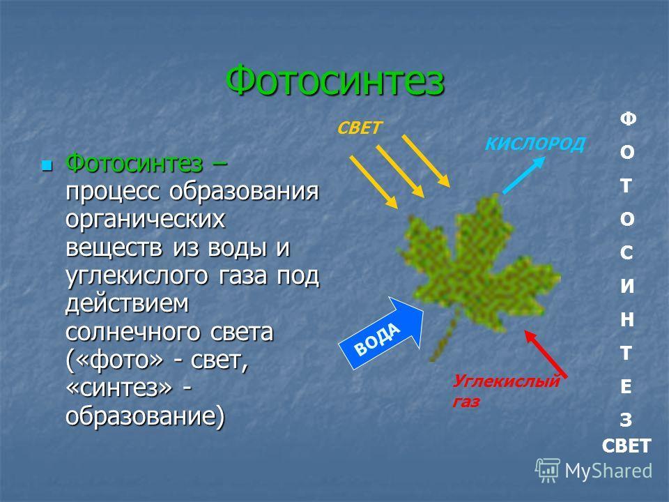 Фотосинтез Фотосинтез – процесс образования органических веществ из воды и углекислого газа под действием солнечного света («фото» - свет, «синтез» - образование) Фотосинтез – процесс образования органических веществ из воды и углекислого газа под де
