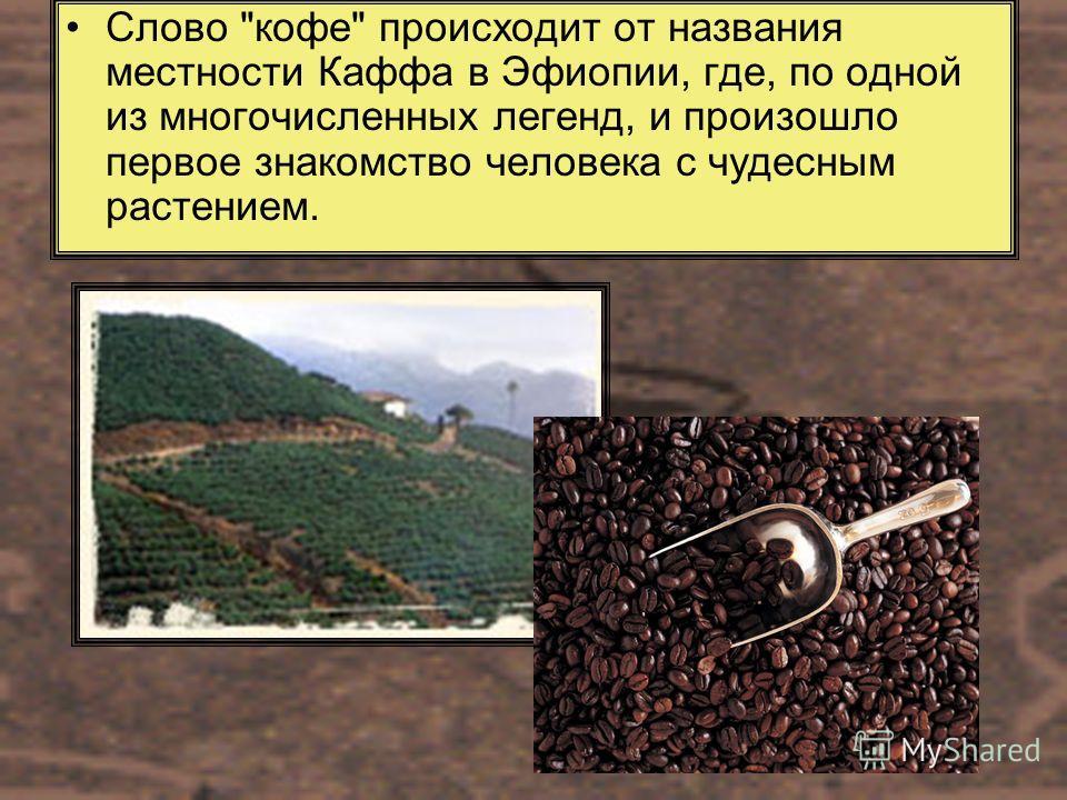 Слово кофе происходит от названия местности Каффа в Эфиопии, где, по одной из многочисленных легенд, и произошло первое знакомство человека с чудесным растением.